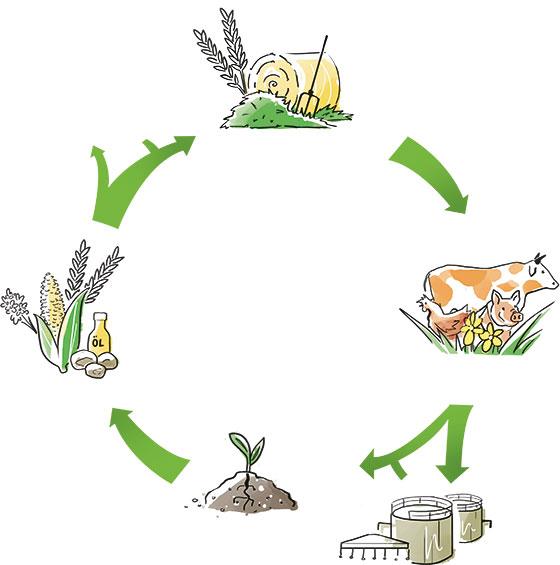 Bio-Kreislauf