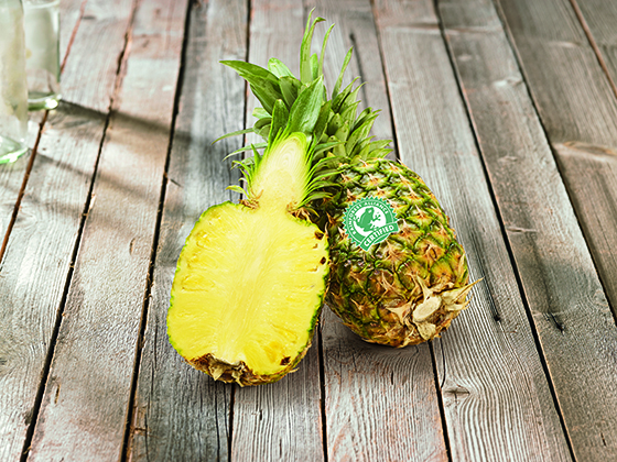 Rainforest Ananas